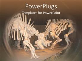 PowerPoint template displaying 2 dinosaur skeletons with bones, museum, archaeology, paleontology, fossils