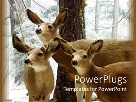 PowerPlugs: PowerPoint template with 3 deer standing together looking at something with snow in the background