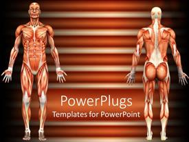 PowerPoint template displaying 3D representation of the human body depicting the muscle structure of a male individual