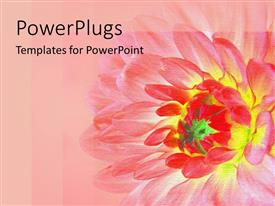 PowerPlugs: PowerPoint template with abstract yellow and red depiction of a flower  on pink background
