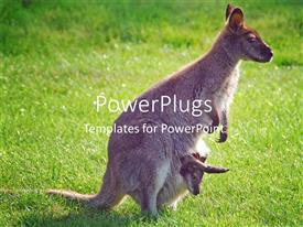 PowerPlugs: PowerPoint template with adult kangaroo female with baby in her pouch with green garden