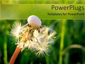PowerPlugs: PowerPoint template with airy dandelion with blurry green vegetation as background