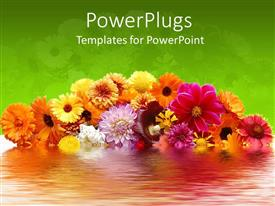 PowerPoint template displaying amazing flowers with different and attractive colors and green background
