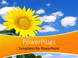 PowerPlugs: PowerPoint template with beautiful yellow sunflower over blue cloudy sky in background
