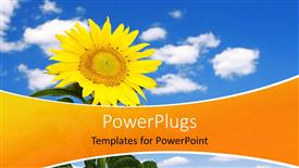 PowerPoint template displaying beautiful yellow sunflower over blue cloudy sky in background