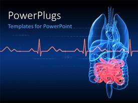 PowerPlugs: PowerPoint template with anatomy depiction of human organs with highlighted intestines and ECG graph