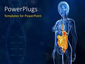 PowerPlugs: PowerPoint template with the anatomy of a human being with bluish background