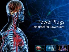 PowerPoint template displaying the anatomy of a human with bluish background