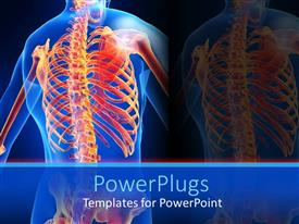 PowerPoint template displaying an anatomy of a human skeletal system of the back