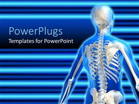 PowerPoint template displaying anatomy of the human skeletal system on a blue background