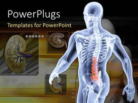 PowerPlugs: PowerPoint template with an anatomy of a person with kidneys in the background