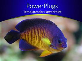 PowerPlugs: PowerPoint template with angel fish in display over colorful background and blue frame