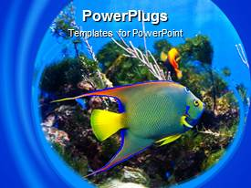 PowerPoint template displaying angel fish swimming over coral reef in blue background