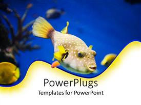 PowerPlugs: PowerPoint template with the aquatic life in the ocean depicted with the help of a beautiful fish