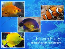 PowerPlugs: PowerPoint template with aquatic theme with four depictions of fishes in the sea water
