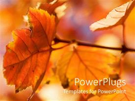 PowerPoint template displaying autumn season with red and orange leaves glowing in sunlight