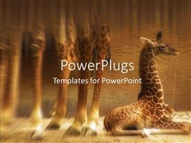 PowerPoint template displaying a baby giraffe lying in a desert on a blurry background