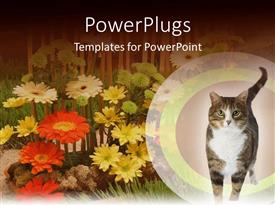 PowerPoint template displaying background of colorful flowers with cat at bottom right corner