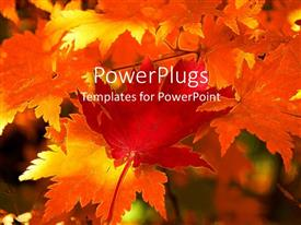 PowerPlugs: PowerPoint template with background consisting on autumn maple leaves, yellow, orange and red maple leaves