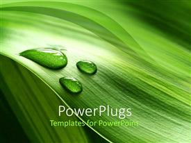 PowerPoint template displaying a background of green plant leaf with water drops