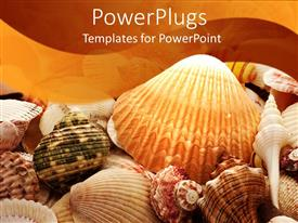 PowerPlugs: PowerPoint template with a background of sea shells and starfish of different colors