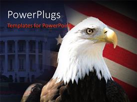 PowerPoint template displaying bald American eagle over American flag and United States White house