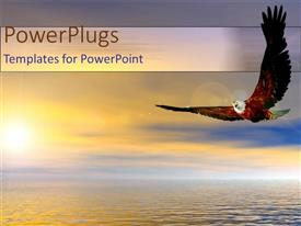 PowerPlugs: PowerPoint template with bald eagle bird flying above ocean sunset as a metaphor