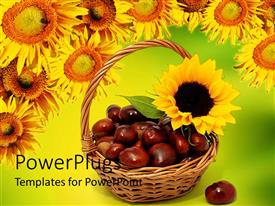 PowerPoint template displaying a basket full of chestnuts with sunflowers in the background