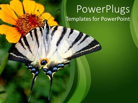 PowerPlugs: PowerPoint template with beautiful black and white butterfly perching and sucking nectar of flower