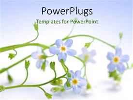 PowerPlugs: PowerPoint template with beautiful blue flower laying on white background