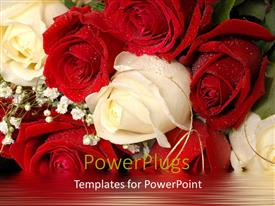 PowerPoint template displaying beautiful bunch of white and red roses with water droplets