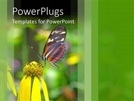 PowerPlugs: PowerPoint template with beautiful butterfly perch on flower in garden to suck nectar