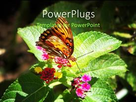 PowerPlugs: PowerPoint template with beautiful butterfly perch on nectar of flower with grunge background
