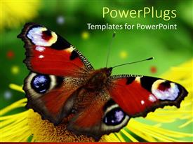 PowerPoint template displaying beautiful butterfly perches on flower in garden to suck nectar