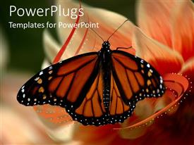 PowerPlugs: PowerPoint template with beautiful butterfly perches on flower to suck nectar