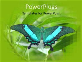 PowerPlugs: PowerPoint template with beautiful butterfly perches on green leaf in garden