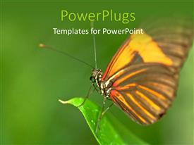 PowerPoint template displaying beautiful butterfly perching on leaf edge on green background