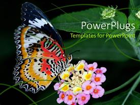 PowerPlugs: PowerPoint template with beautiful butterfly sucking nectar from flower