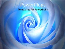 PowerPlugs: PowerPoint template with beautiful close up of white glossy blue rose petals