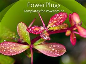 PowerPlugs: PowerPoint template with beautiful and colorful flowers and rain on their surface