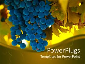 PowerPoint template displaying a beautiful depiction of blue grapes with yellowish trees in the background