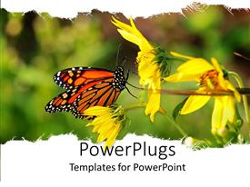 PowerPlugs: PowerPoint template with a beautiful depiction of a butterfly sitting on a sunflower