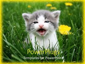 PowerPoint template displaying a beautiful depiction of a cat in grass along with flowers