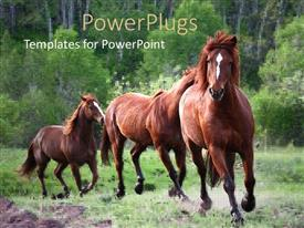 PowerPoint template displaying a beautiful depiction of a horses running in the field