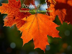 PowerPoint template displaying a beautiful depiction  of a number of leaves with blurred background