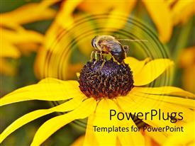 PowerPlugs: PowerPoint template with a beautiful depiction of a sunflower and a bee