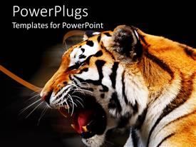 PowerPoint template displaying a beautiful depiction of a tiger with dark background