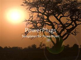 PowerPoint template displaying a beautiful depiction of a tree along with the sun in the background