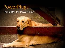 PowerPlugs: PowerPoint template with beautiful dog waiting for the owner at the front door of the farm