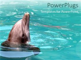 PowerPlugs: PowerPoint template with beautiful dolphin playing in a calm light green pool